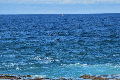 If you're lucky enough, maybe dolphins will come again!