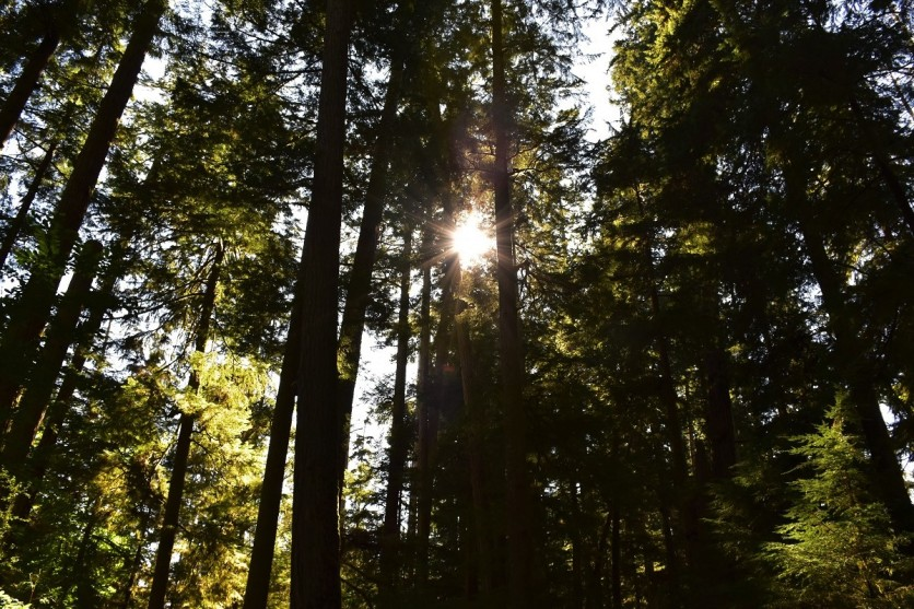 Cathedral Grove, Vancouver Island