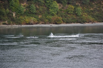 Orcas, ferry, Vancouver Island
