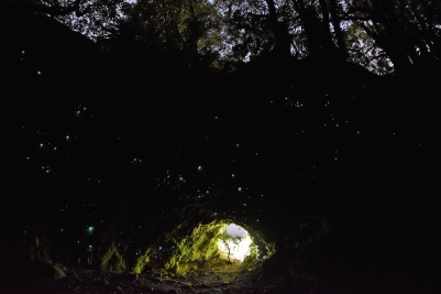 Glowworms, Hokitika