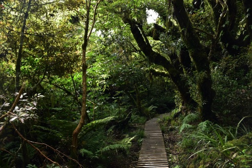 The track to the Dawson Falls on the southern side of Mount Taranaki