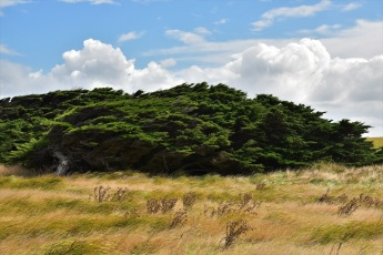 Trees, Waipapa Point