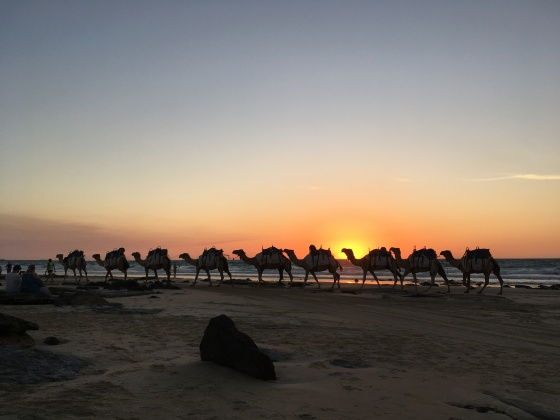 Camels, sunset, Cable Beach, Broome