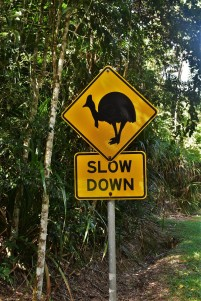 Cassowary sign, Daintree Rainforest