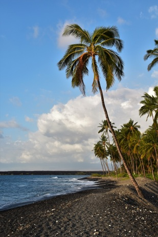 Palm tree, Kiholo Bay, Big Island