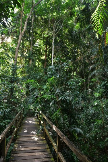 Jungle Walk, Kuranda