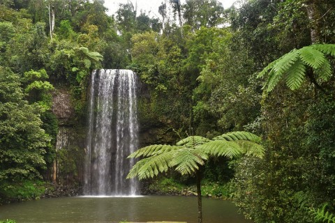 Millaa Millaa Falls