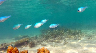 Fishes, Ningaloo Reef, Cape Range National Park