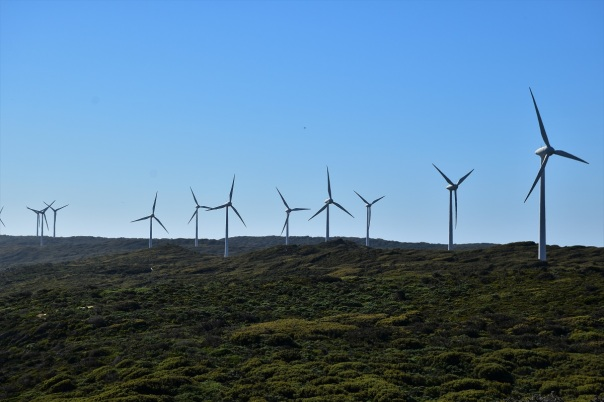 Wind Farm, Albany