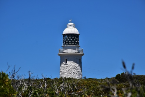 Cape Naturalist, lighthouse