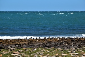 Birds, Point Lowly, South Australia
