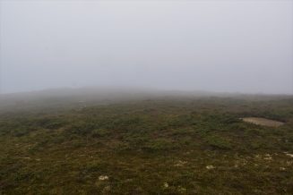 Fog, Cradle Mountain, Tasmania