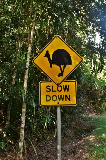 Cassowary warning sign in the Daintree Rainforest