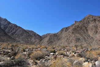 Palm canyon, Anza-Borrego