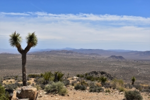 Joshua Tree National Park, Ryan Hill