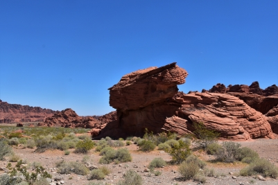 Valley of Fire, rabbit