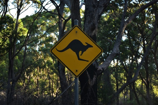 Kangaroo sign, Jervis Bay