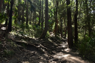 Forest, Royal National Park