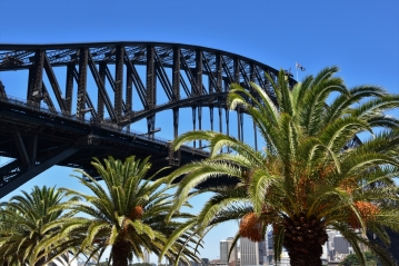 Harbour Bridge, palm trees