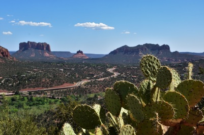 Sedona, Airport Road lookout, cactus