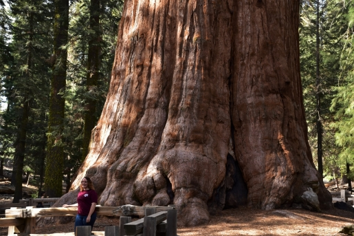 Sequoia National Park, General Shermann Tree