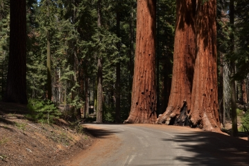 Sequoia National Park, road