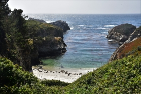 Point Lobos State Park, China Cove, sea lions