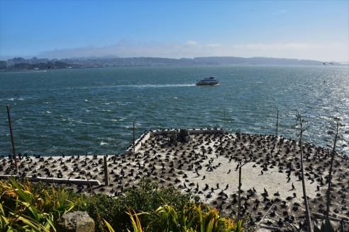 San Francisco, Alcatraz, birds