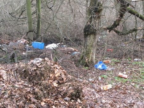 trash-in-forest