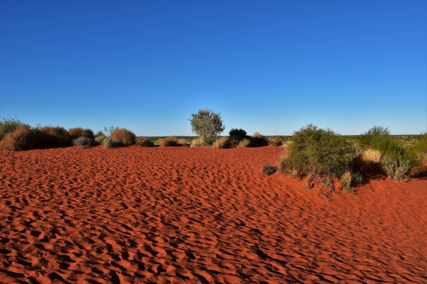Red dust, desert