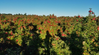 farmwork-australia-apple-shadow-selfie