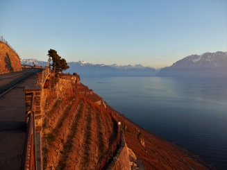 Lavaux, sunset, Lake Geneva