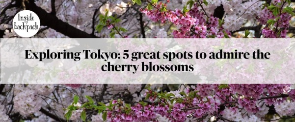 exploring-tokyo-5-great-spots-to-admire-the-cherry-blossoms-article