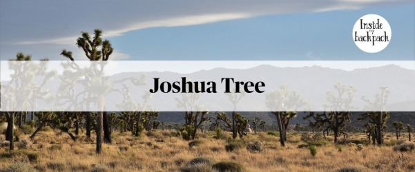 joshua-tree-gallery