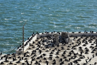 Birds nesting in Alcatraz