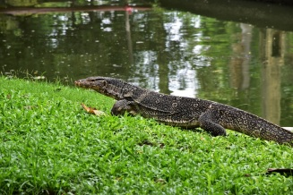 A varan in a park in the centre of Bangkok