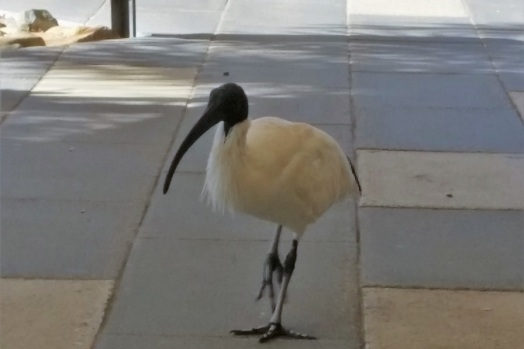 ibis-gold-coast-airport