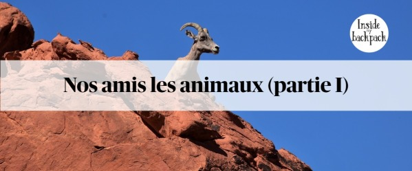 nos-amis-les-animaux-article